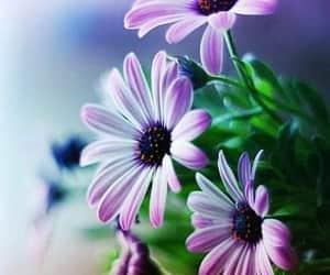 beautiful+beau+belo, bonito+güzel+tatlı, and sweet+wow+amazing image