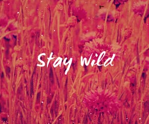 wild, wallpaper, and stay image