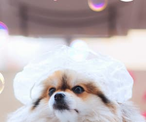 animals, fashionable, and fluffy image