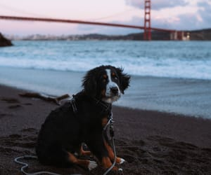dog, animal, and landscape image