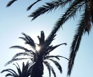 holidays, palms, and relax image