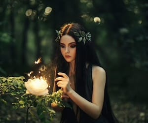 forest, artistic, and creative image
