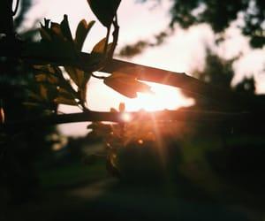 nature, photography, and seasons image