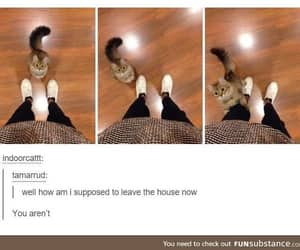 cat, adorable, and funny image