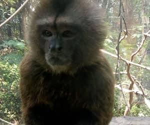 Animales, Chango, and monos image