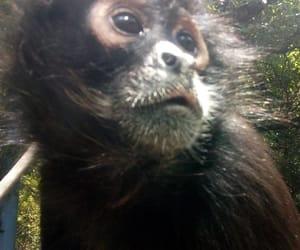 Animales, monos, and zoologico image