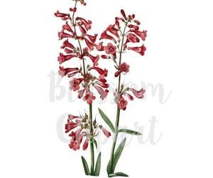 etsy, flower illustration, and floral clip art image