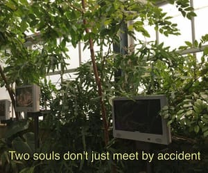 quotes, green, and soul image