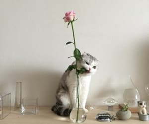 cat, flower, and aesthetic image