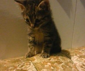 animals, kitten, and kitty image
