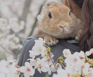 animal, bunny, and flowers image