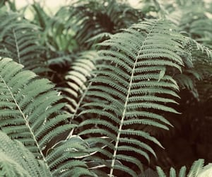 green, ferns, and nature image