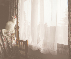 cat and vintage image