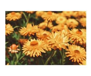 botanical, flowers, and garden image