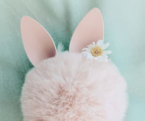 bunny, flower, and fluffy image