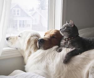 dog, cat, and animal image