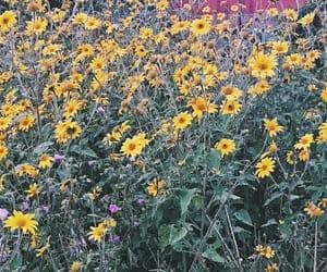 amarillo, verde, and flores amarillas image