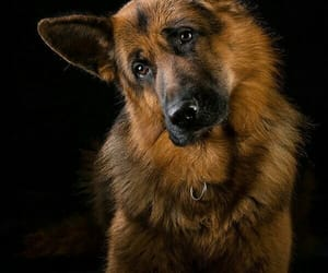 dogs, hunde, and tiere image