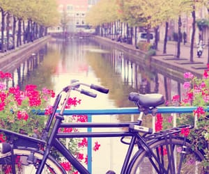 bridge, bycicle, and flowers image