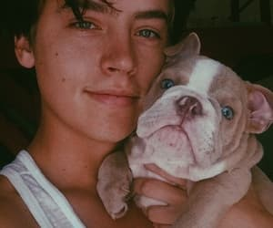 cute, dog, and cole sprouse image