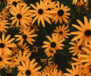 felicidad, hipster, and flowers image