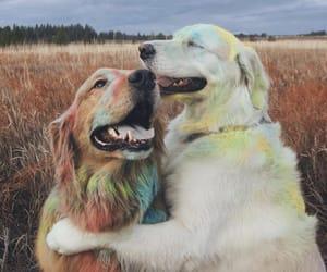 color, golden retriever, and cute image