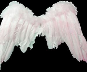 png, angel, and Angel Wings image