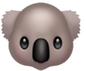 Koala, png, and sticker image