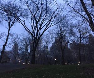 amazing, centralpark, and newyork image