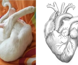 cat, cutie, and heart image