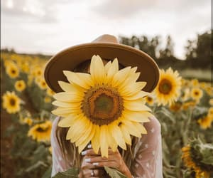 girl, sunflower, and field image