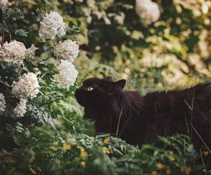 cat, flowers, and black cat image
