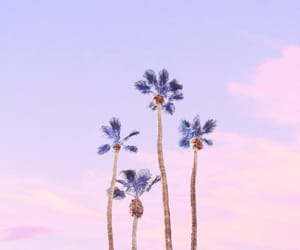 california, palm trees, and lilac image