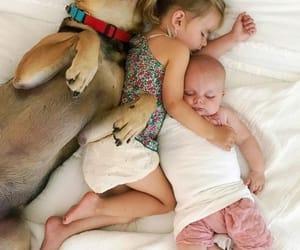 amor, Animales, and familia image