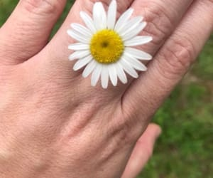 daisy, love, and flower image