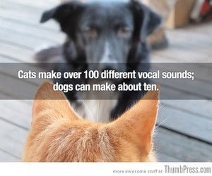 cats, cats are better than dogs, and vocal sounds image