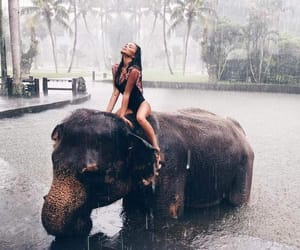 bali, elephant, and luxury image