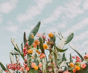 cactus, flowers, and photography image