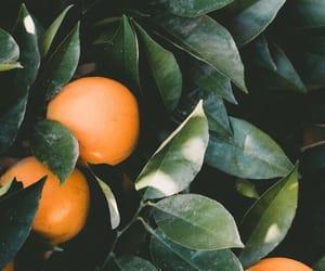 orange, wallpaper, and fruit image