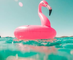 summer, flamingo, and pink image