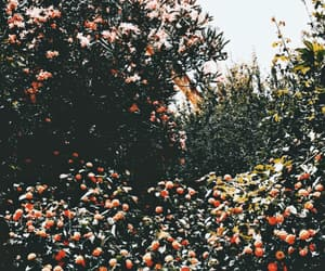 aesthetic, aesthetics, and flowers image