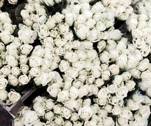 copenhagen, flower, and green image