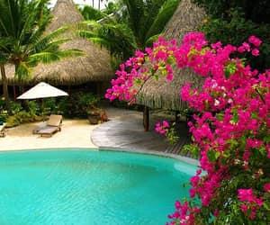 holidays, swimming, and tropics image