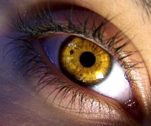 eye, gold, and yellow image