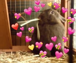 aesthetics, animals, and bunny image
