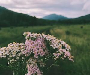 облака, лес, and розовый image