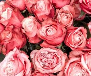 pink, roses, and ​beatiful image