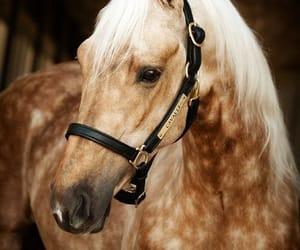 horse and dapple image