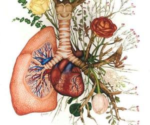 art, arte, and heart image
