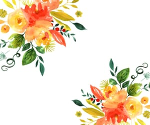 background, flowers, and orange image